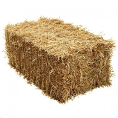 Rental store for STRAW BALE in Reading PA